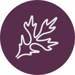 Lavender Balsam Fir Needles-Serenity