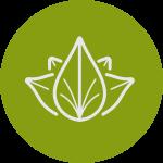 Zen-Rosemary, Mint